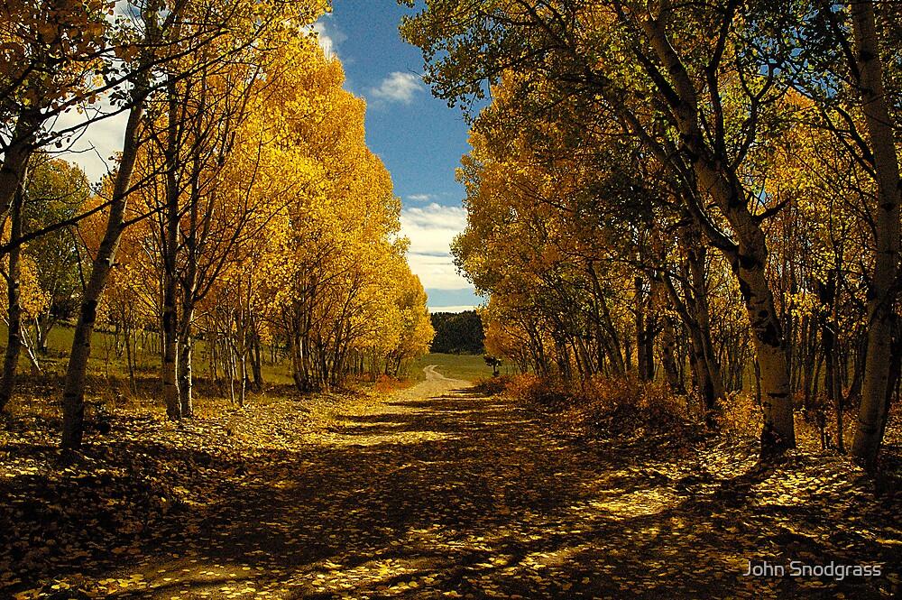 Aspen Trail by John Snodgrass
