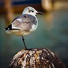 Arrogant Seagull by AspenWillow
