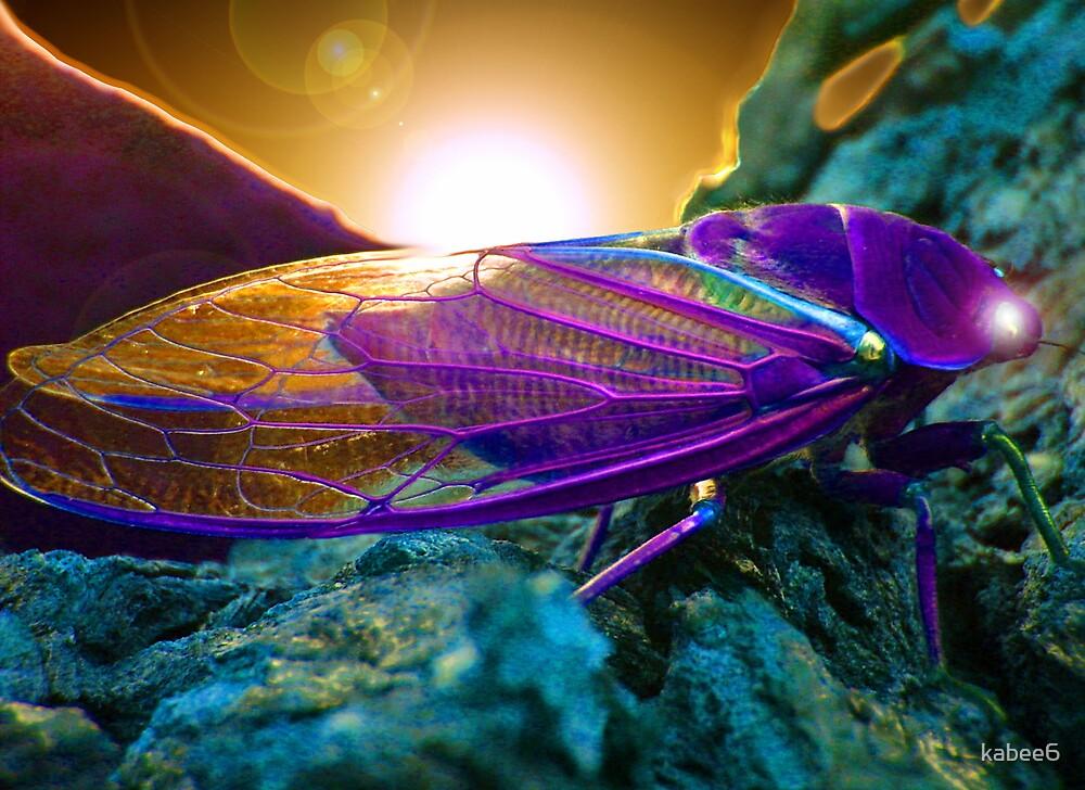 colorbug by kym banks