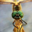 Dragonfly by Kitsmumma