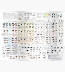 House Cat Colors and Patterns Poster