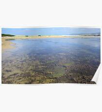 Wetland Waters Poster