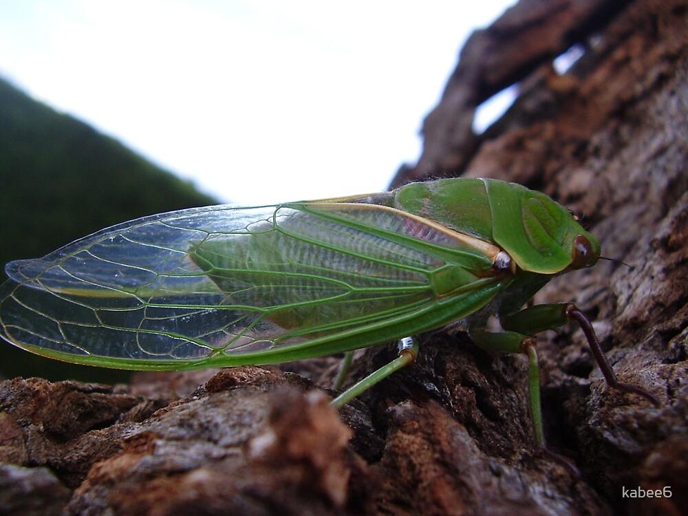 cicada original by kabee6