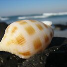 Patchy Shell by craigNdi