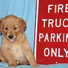 Max- Fire Truck Parking by goldnzrule