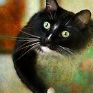 Fabulous Felines by Lynn Starner