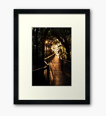 To the beach - Palm Cove, Queensland Framed Print