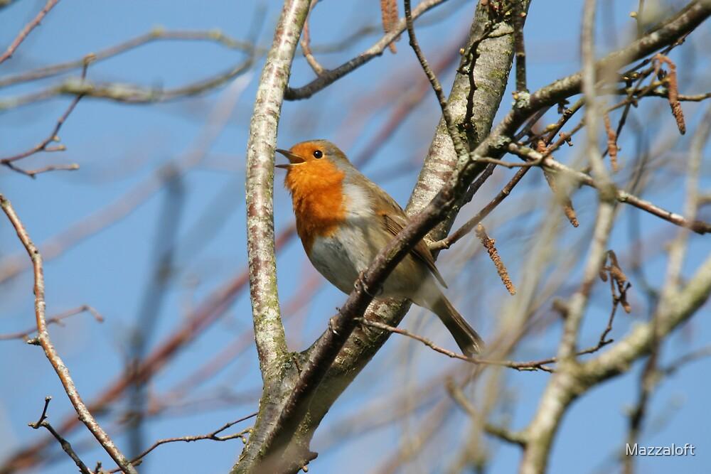 Spring Robin Song by Mazzaloft