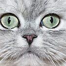 Cat closeup by Ravet007