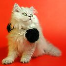 Cute cat 1 by Ravet007