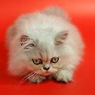 Cute cat 4 by Ravet007