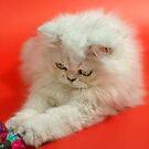 Cute cat 3 by Ravet007