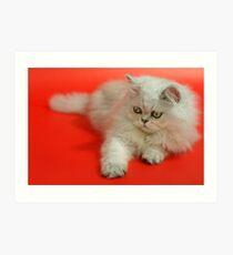 Cute cat 5 Art Print