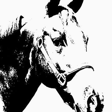 horse by zarathustra