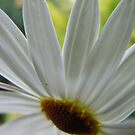 Abstract Daisy... by John Gilluley