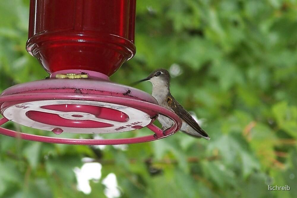 Hummingbird by lschreib