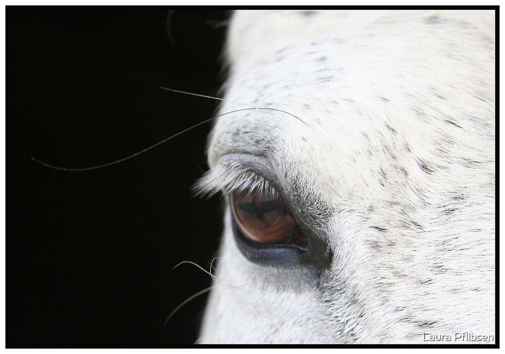 Eye See You by Laura Pflibsen