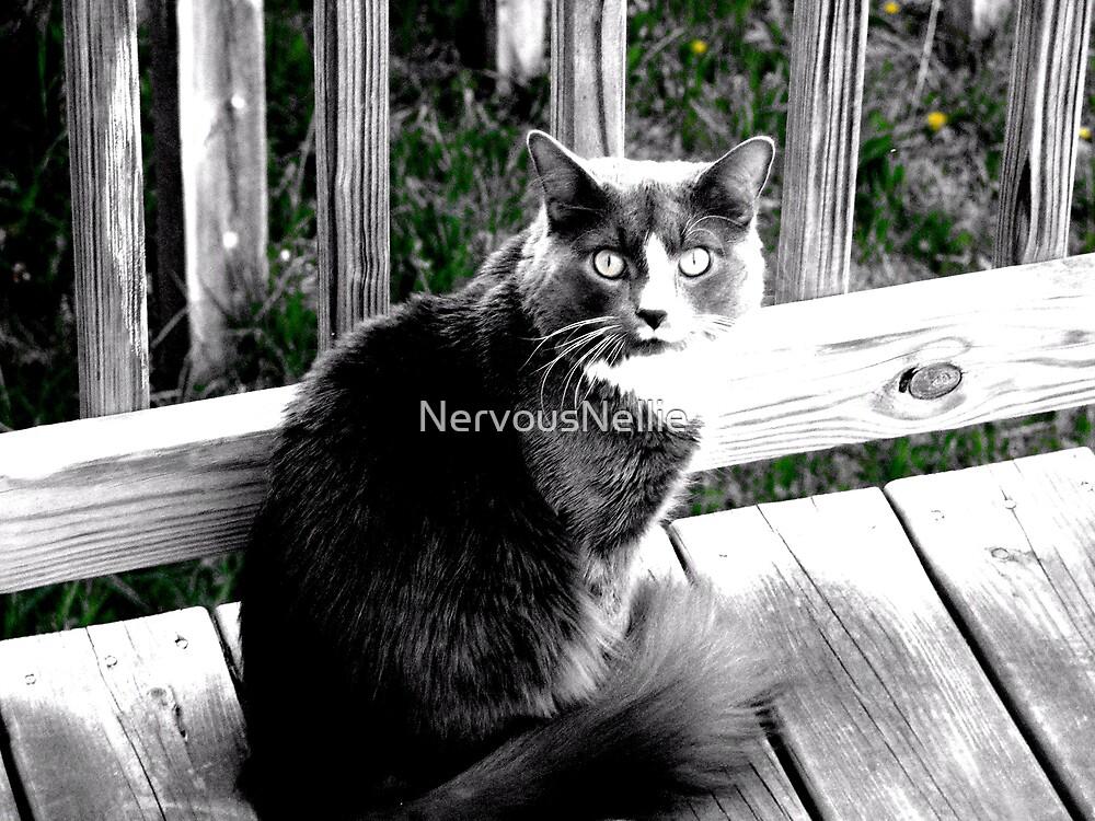 Kitty by NervousNellie