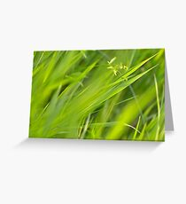 Shallow Blades of Grass Greeting Card
