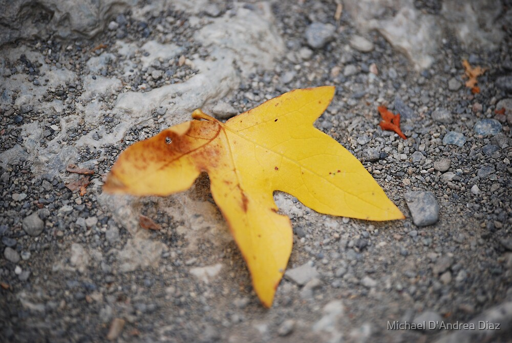 Yellow Leaf by Michael D'Andrea Diaz
