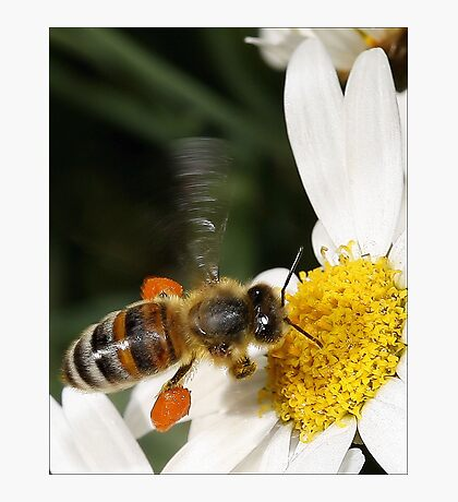 A Little Taste of Nectar! Photographic Print