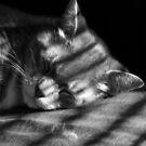 Tom, Lazycat by jude walton
