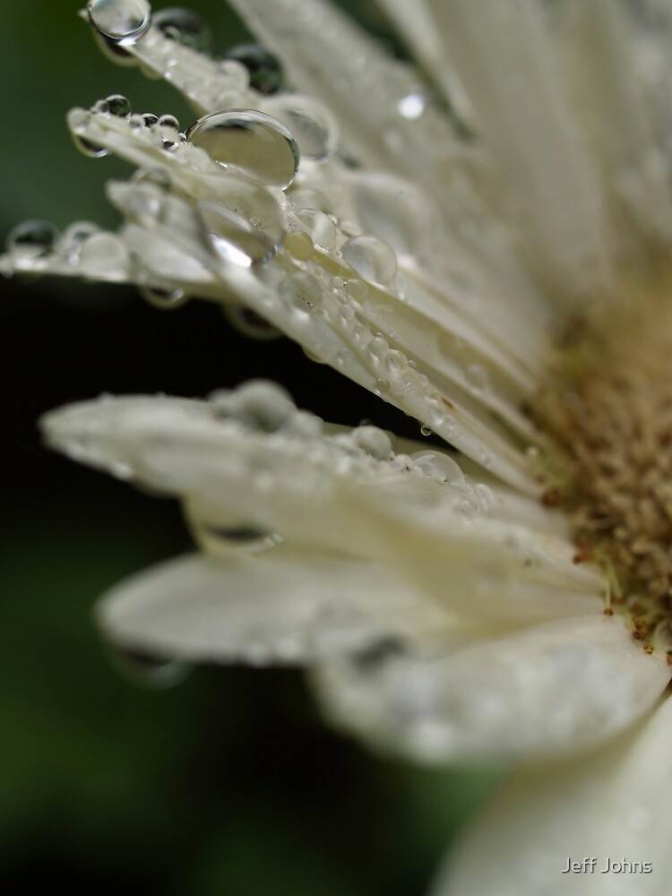 Flower Rain by Jeff Johns