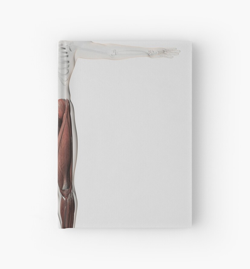 Cuadernos de tapa dura «Anatomía del músculo masculino de las ...