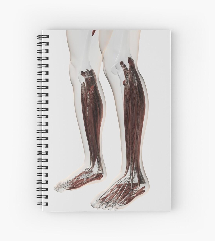 Cuadernos de espiral «Anatomía del músculo masculino de las piernas ...