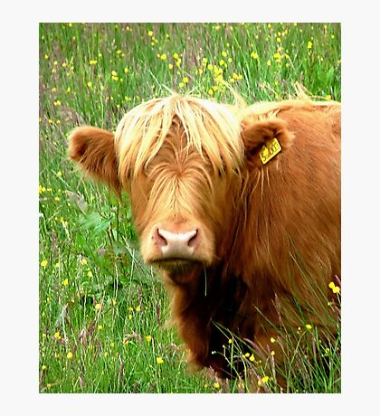 Buttercup says ' Who said beefburger ?'............ Photographic Print