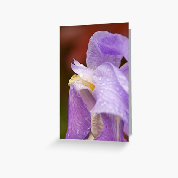 Rain drops on a Iris Greeting Card