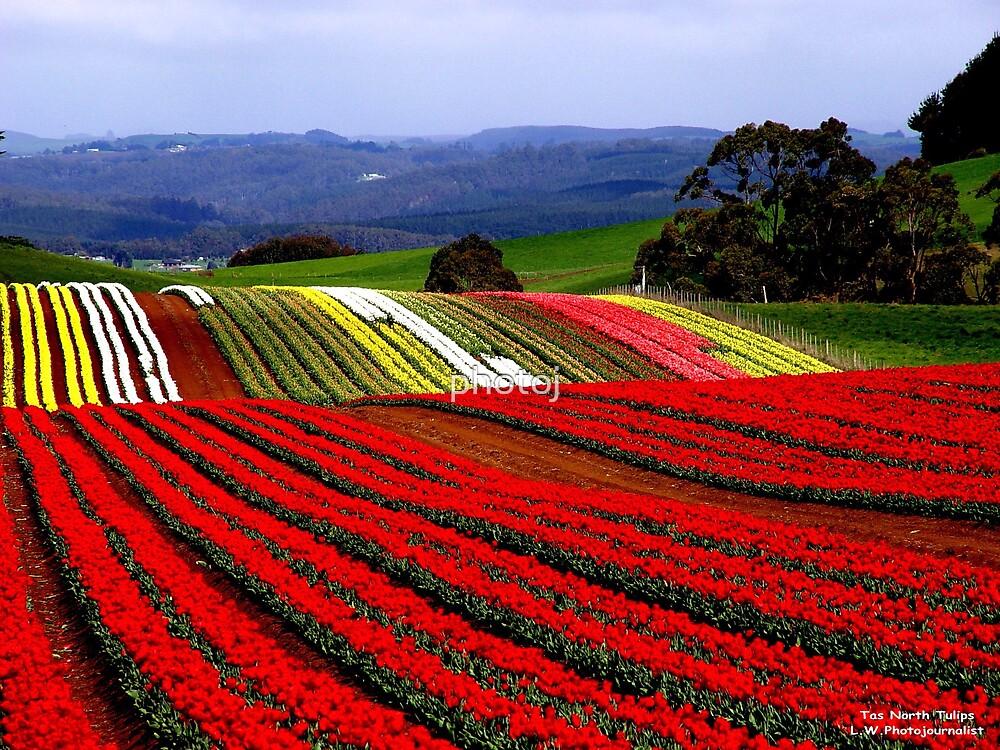 photoj Tasmania  'Tip Toe Through The Tulips'  by photoj
