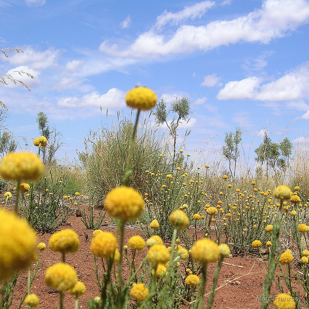 Desert Daisy by Marc Franzone