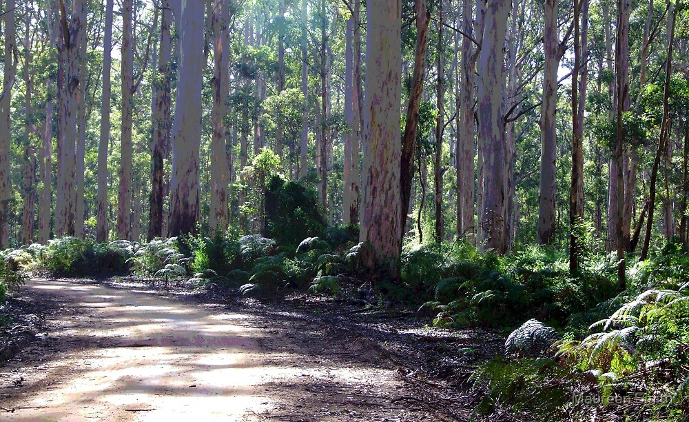Boranup Forest Trees by Maureen Smith