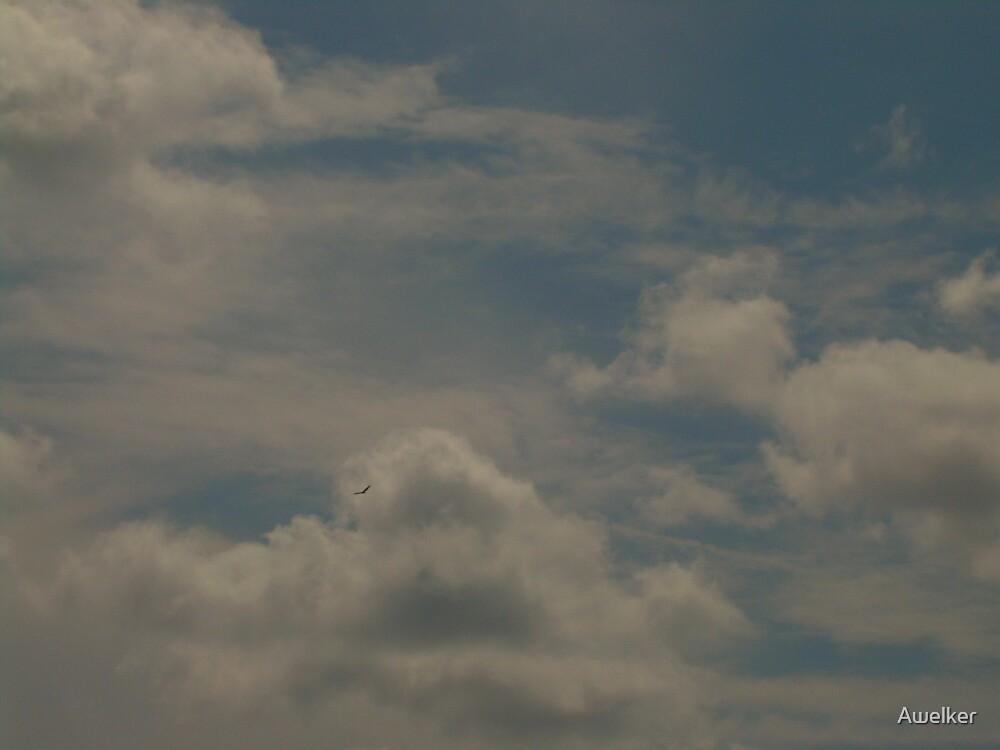 Hawk flying by Awelker