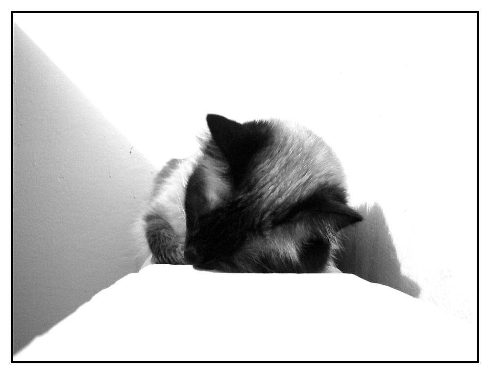 Sleepy by Sorin  Reck