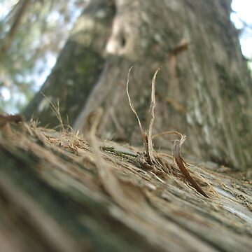climbing by schizoren