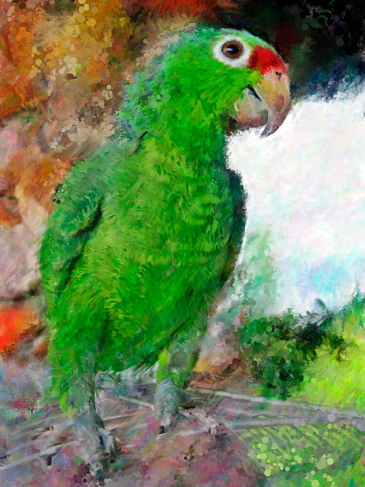 Parrot 3 by DigitalMuse