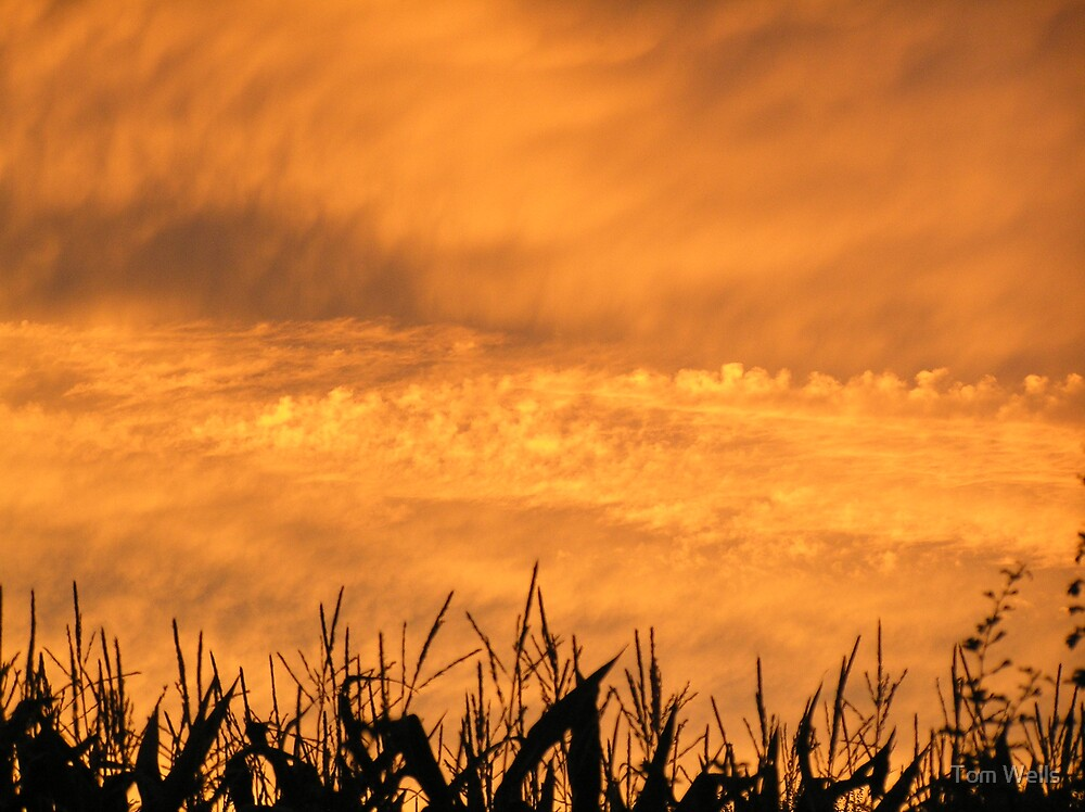 Sunset over Maize by Tom Wells