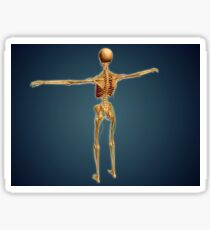Back view of human skeleton with nervous system, arteries and veins. Sticker
