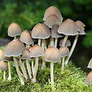 Woodland Fungi by Andyjloft