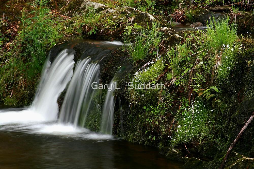 Spring Brook by Gary L   Suddath