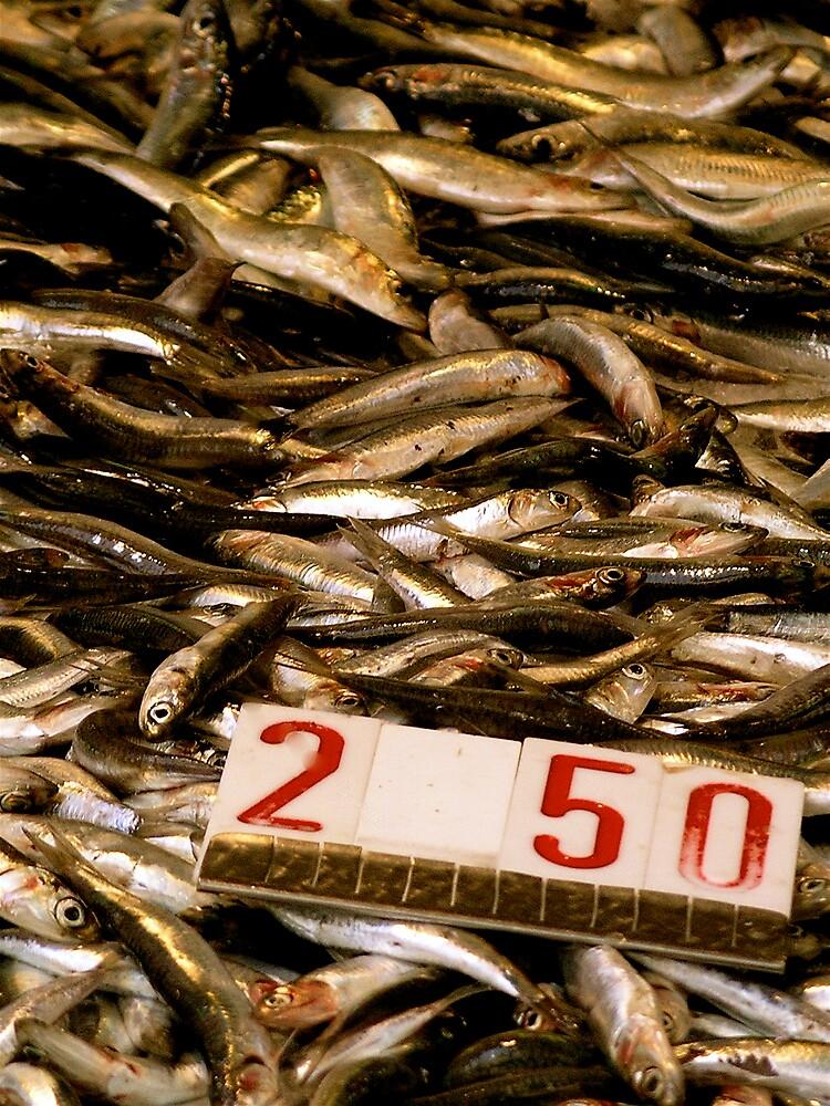 Fresh Fish by John Matthews