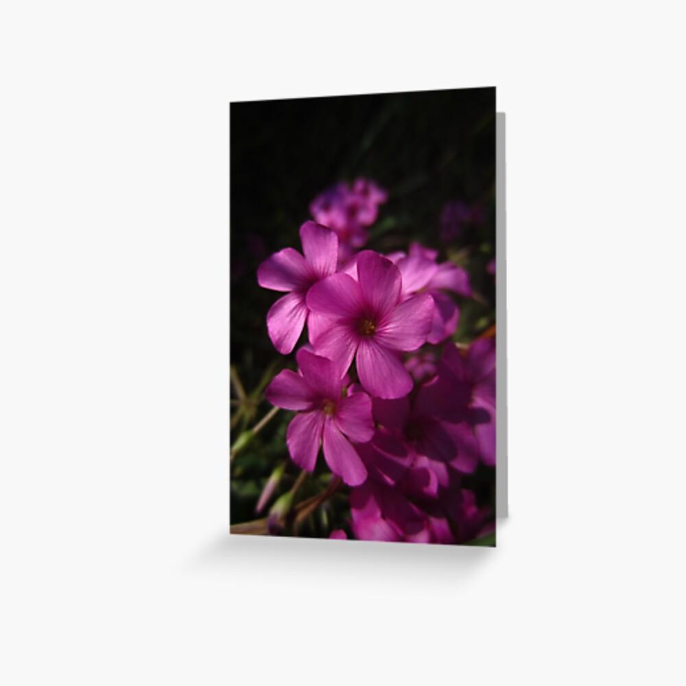 Pink-Sorrel Greeting Card