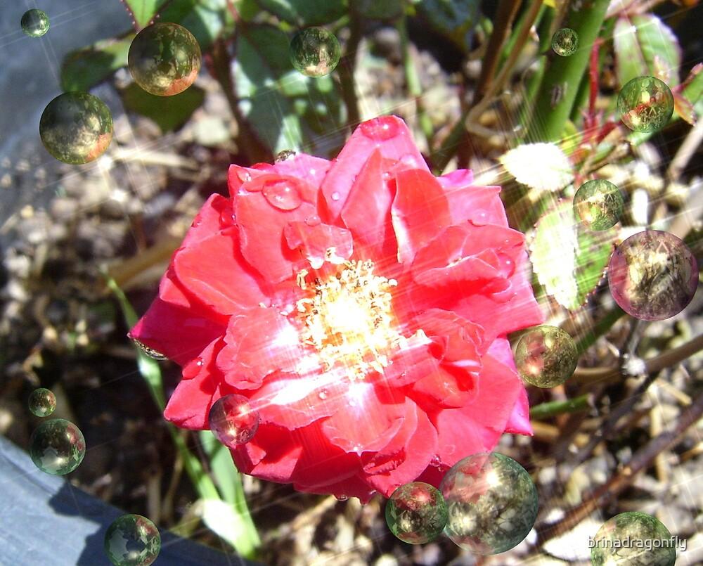 Glow Rose by brinadragonfly