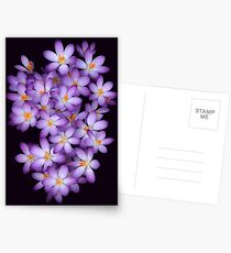 Crocus Postcards