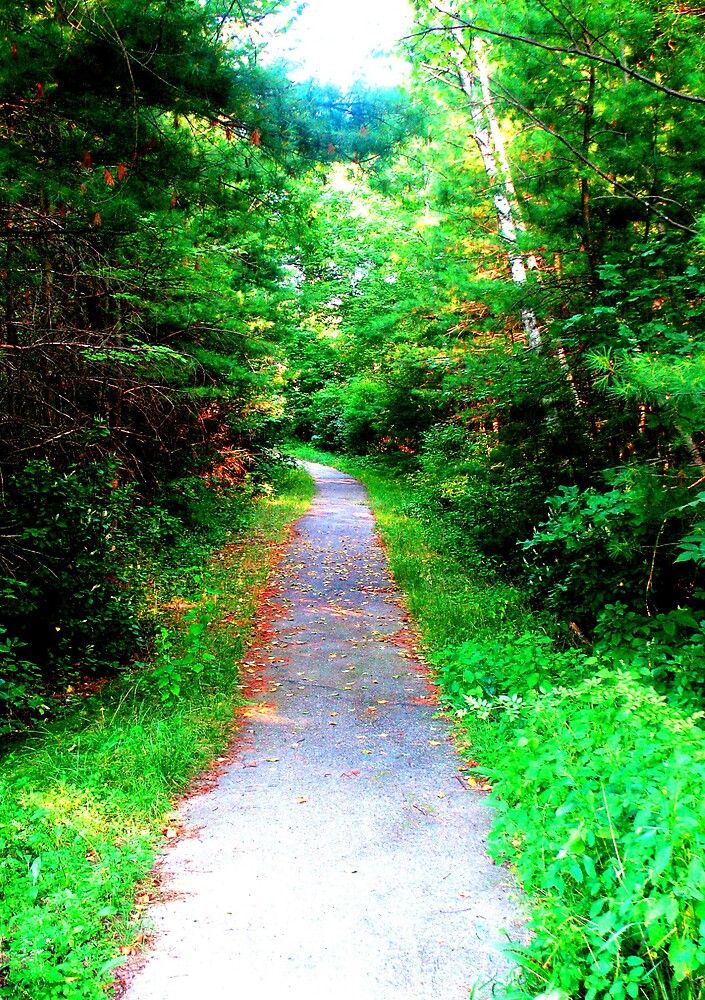 Pathway by Tommy Seibold