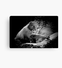 Childs' play Canvas Print
