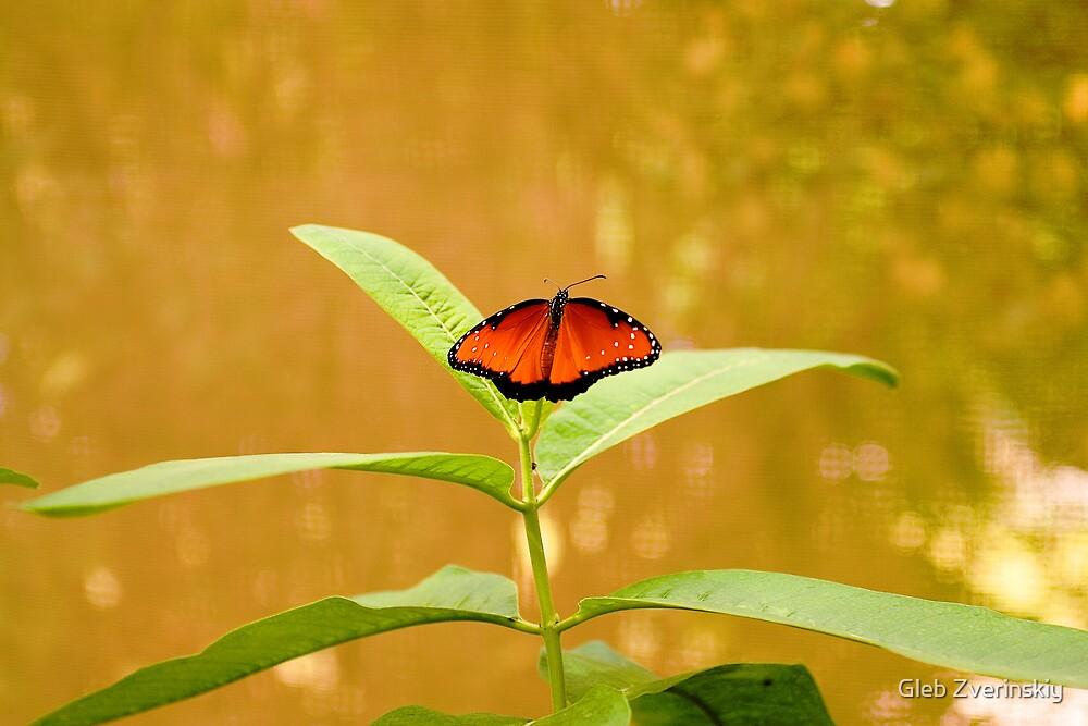 Butterfly at the zoo by Gleb Zverinskiy