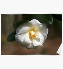 White Camellia III Poster